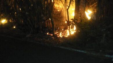 Photo of incendio forestal pone enriesgo varias cabañas en el Km4.