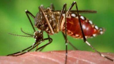Photo of Nueva cepa de zika identificada en Brasil puede causar otra epidemia