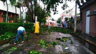Photo of Tornado derriba árboles en Mao