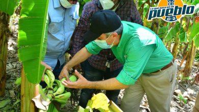 Photo of INESPRE compra más de un millón de plátanos a productores afectados por tormenta Laura
