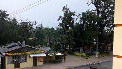 Photo of Fallece niña en Haití tras caída de árbol en vivienda por tormenta Laura
