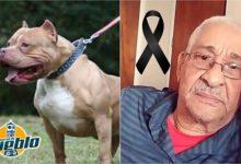 Photo of BAHORUCO: Perro pitbull mata a su propietario mientras lo alimentaba
