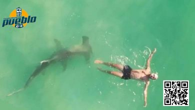 Photo of Tiburón martillo le pasa muy cerca a bañista en una playa de Miami