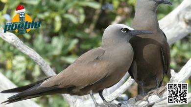 Photo of Arrestan a tres personas por muertes cientos aves migratorias Montecristi