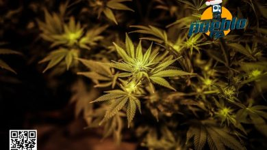 Photo of Los legisladores de Nueva Jersey aprueban el uso recreativo de la marihuana