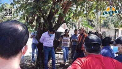 Photo of Amarran a un árbol un alcalde en México por entregar obra de mala calidad