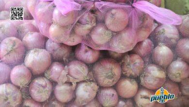 Photo of Productores de Vallejuelo muestran cosecha y agradecen intervención del Gobierno