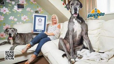 Photo of Freddy, el perro más alto del mundo, muere a los 8 años