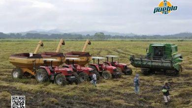 Photo of La FAO prevé fuertes disminuciones de las reservas mundiales de cereales