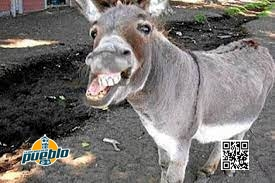 Photo of Un burro devora a dentelladas a una anciana en El Seibo
