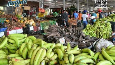 Photo of Precios de varios productos agrícolas comienzan a bajar