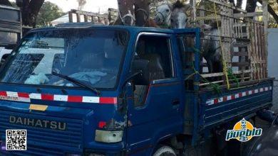 Photo of PN investiga procedencia de caballos que eran transportados de manera ilegal