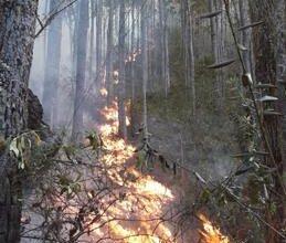 Photo of Piden más personal para sofocar incendio en Sierra de Bahoruco
