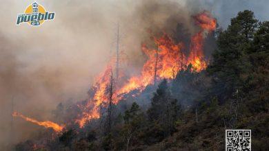 Photo of Incendios consumen más de 800 hectáreas durante la Semana Santa en El Salvador