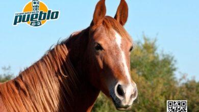 Photo of Un señor muere tras desplomarse de un caballo y ser maltratado por este en La Vega